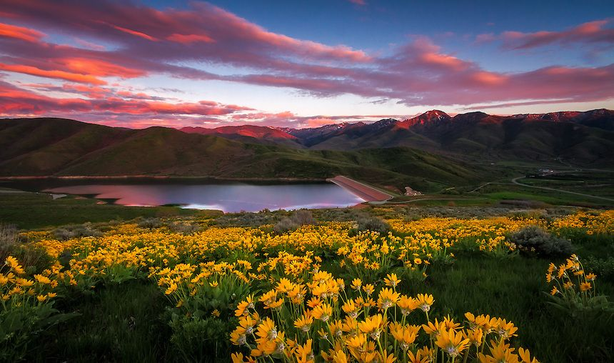 East Canyon Yellow Balsamroot Sunset Landscape Photography Clint Losee Photog Sunset Landscape Photography Landscape Photography Landscape Photography Tips