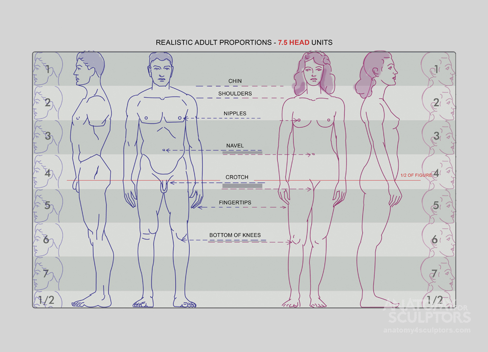 Realistic Proportions - 7 1/2 heads figure - size your chart to 6 ...