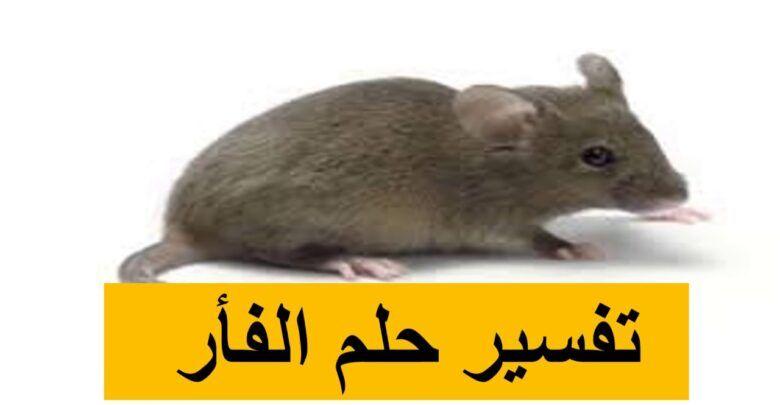 تفسير الفأر في الحلم وقتله للعزباء والمطلقة In 2020