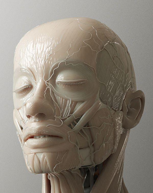 The Anatomy Of Cg Toki Street Anatomy Ref Pinterest Anatomy