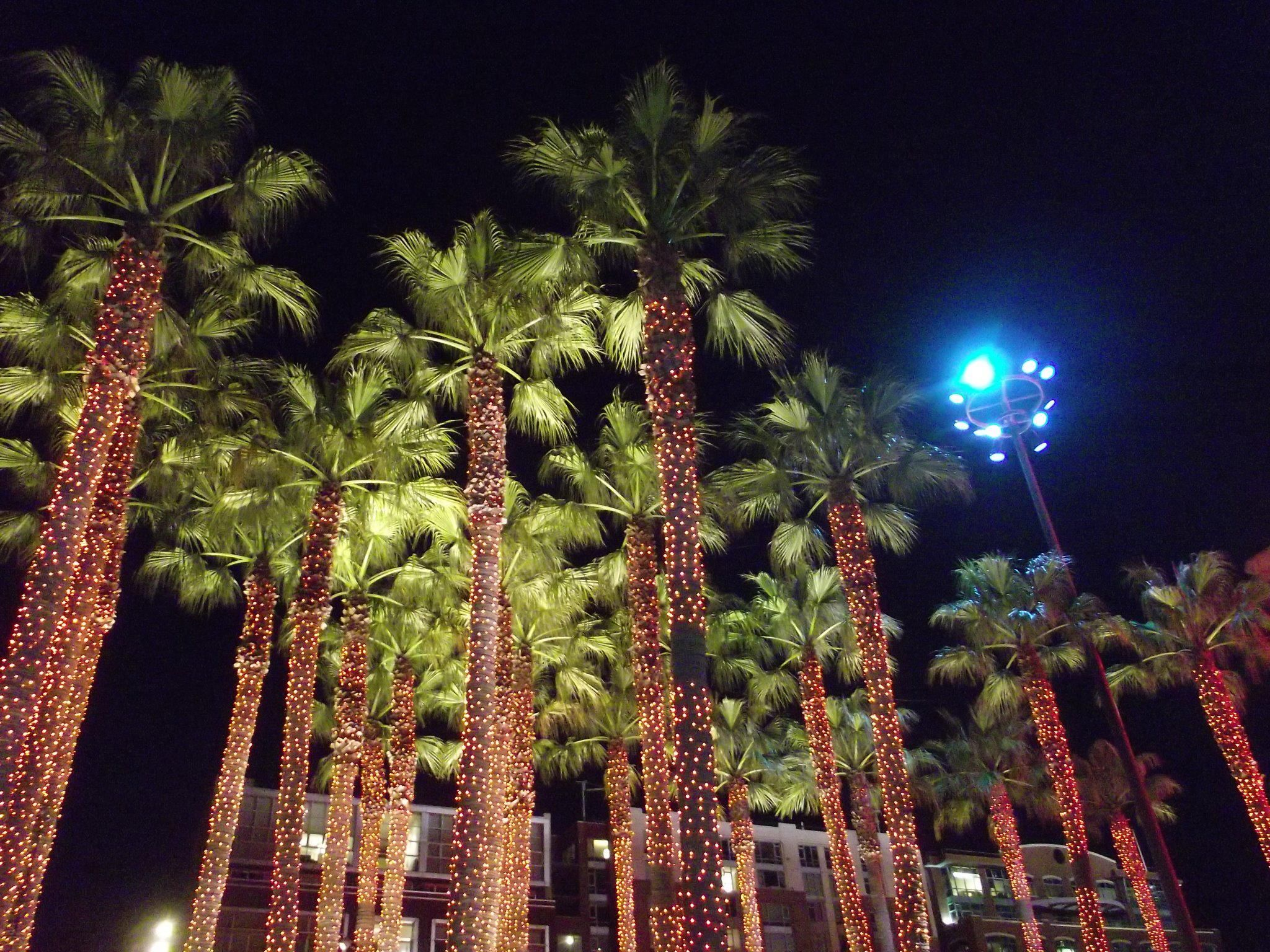I took this photo of the palm trees at ATT ballpark at night!