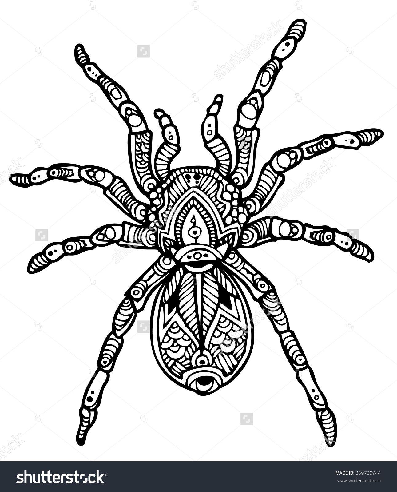 Tarantula Stock Vectors & Vector Clip Art | Shutterstock | Awesome ...