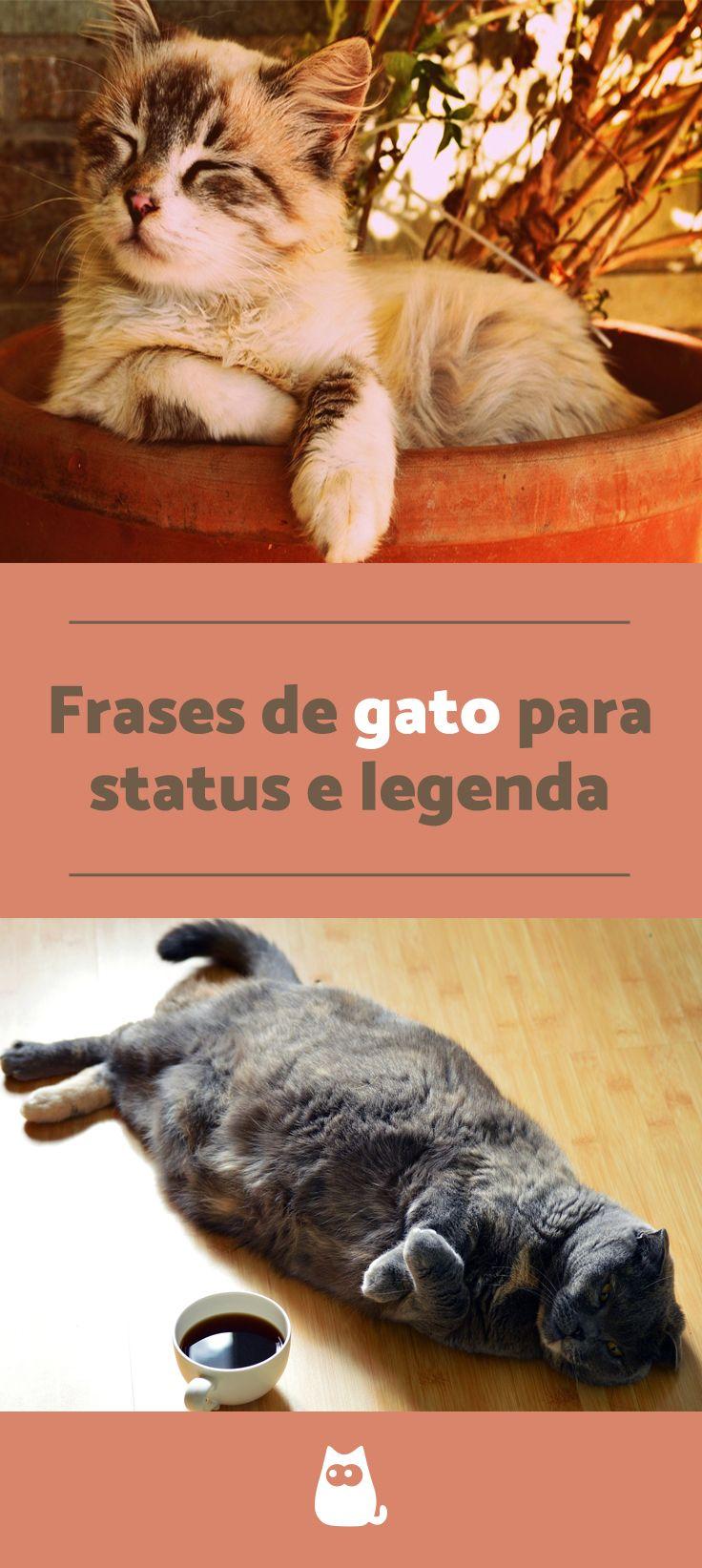 Frases De Gatos Animais De Estimação Gatos E Frase Gato