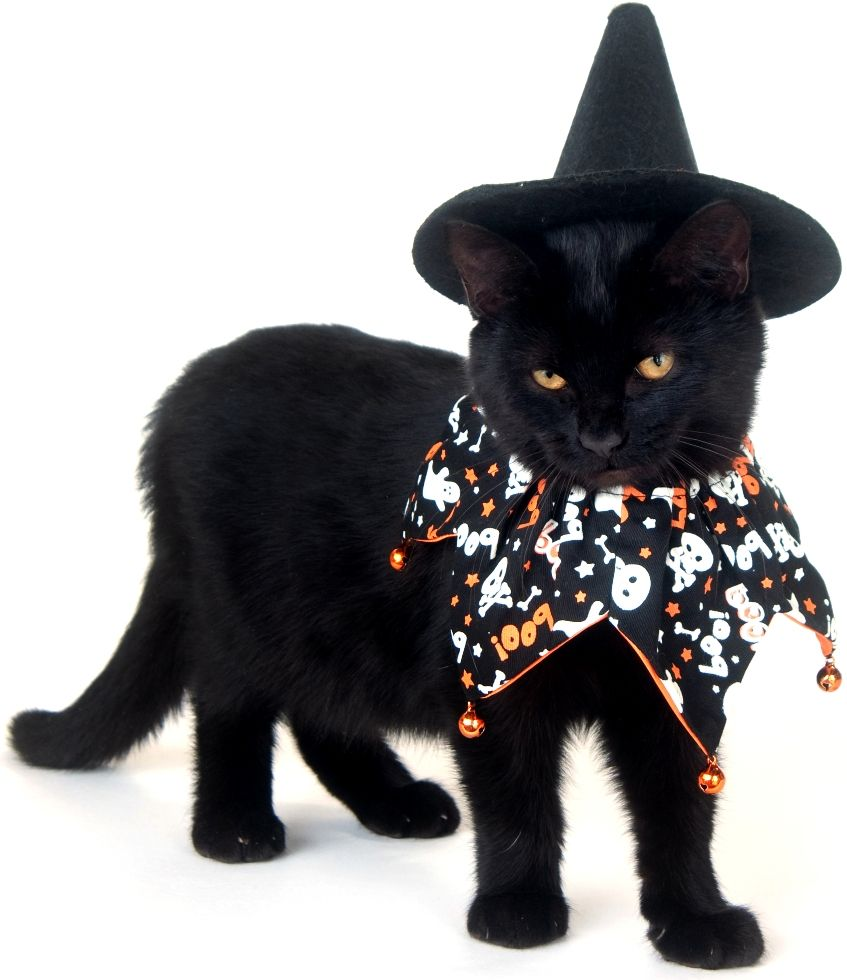 Image result for cats  in halloween costumes