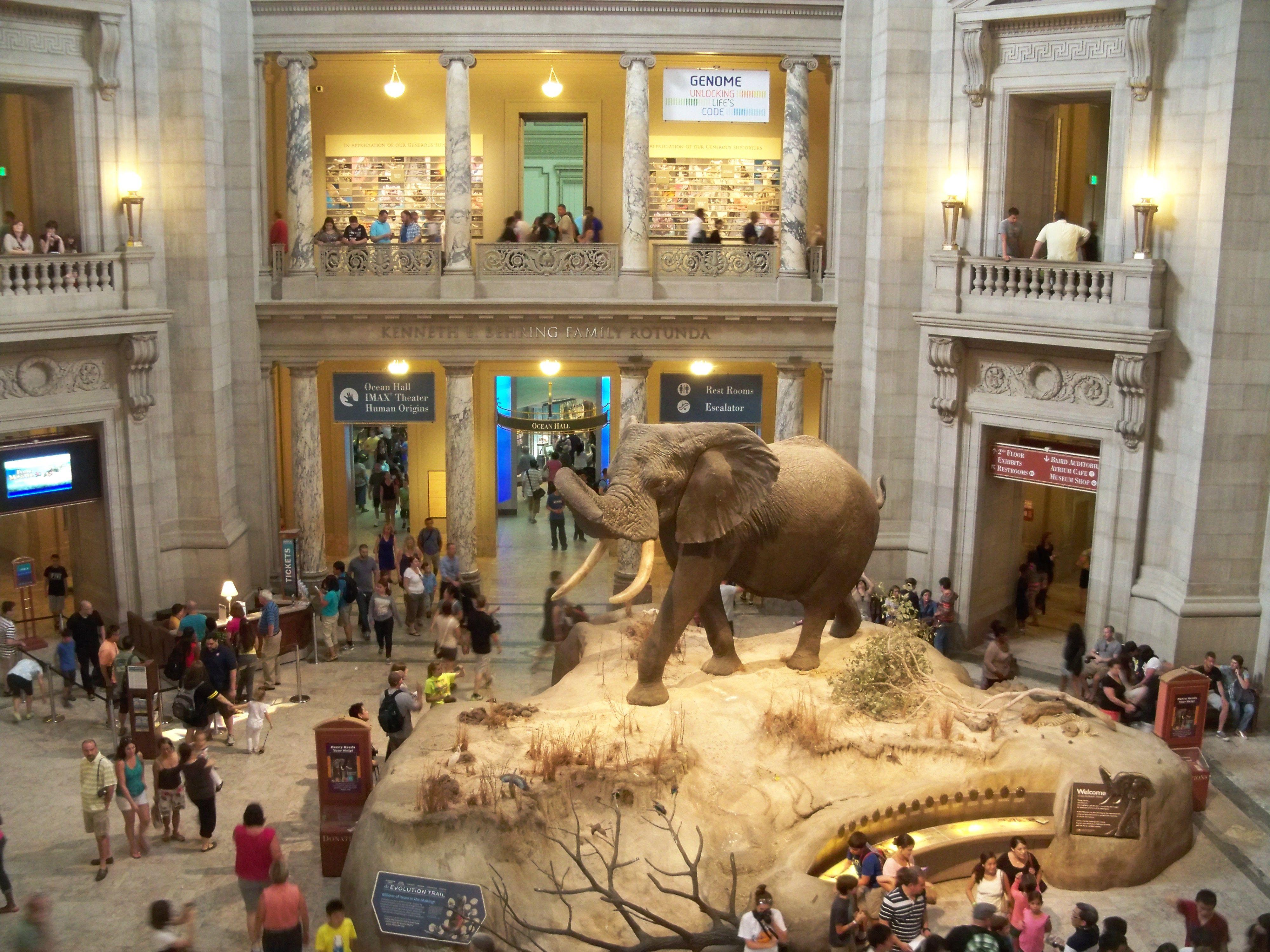 fe5152406cfd5ed9f3ad691bfcdf204a - How Do I Get To The Museum Of Natural History