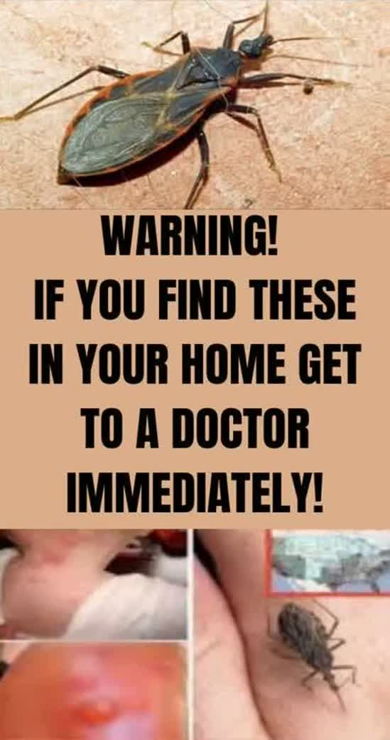 Warning! If You Find These In Your Home Get To A Doctor Immediately !