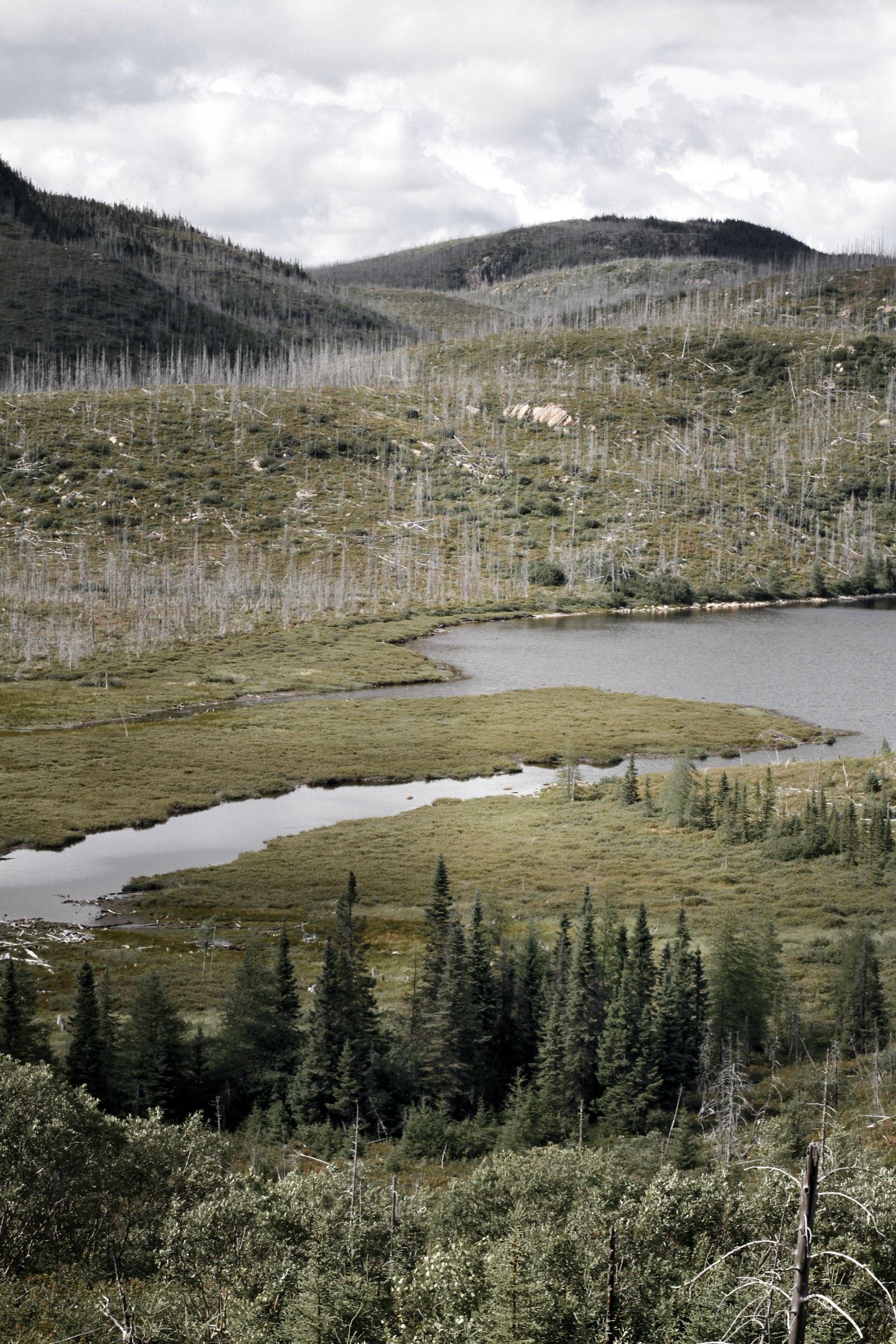 Taiga Boreal Forest Russia Landscape Boreal Forest Landscape