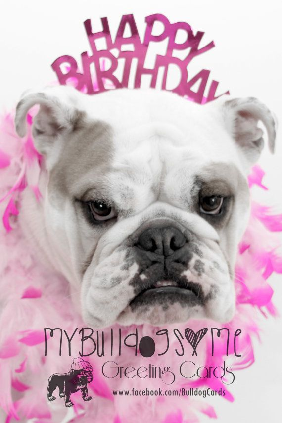 English Bulldog Birthday Card Card 19 By Bulldoggreetingcards