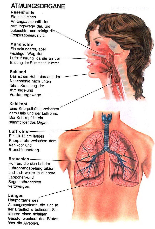 atmung | alemão | Pinterest | Medizin, Gesundheit und Anatomie
