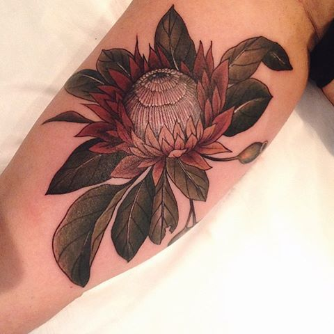 King Protea With Its Mythological Associations To Change And Transformation It S Not Surprising That In The Language Of Tattoos Flower Tattoo Protea Flower