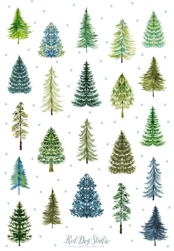 Watercolor Pine Tree Forest Clipart, Watercolor Tr
