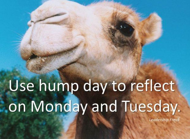 the best thing to do on hump day