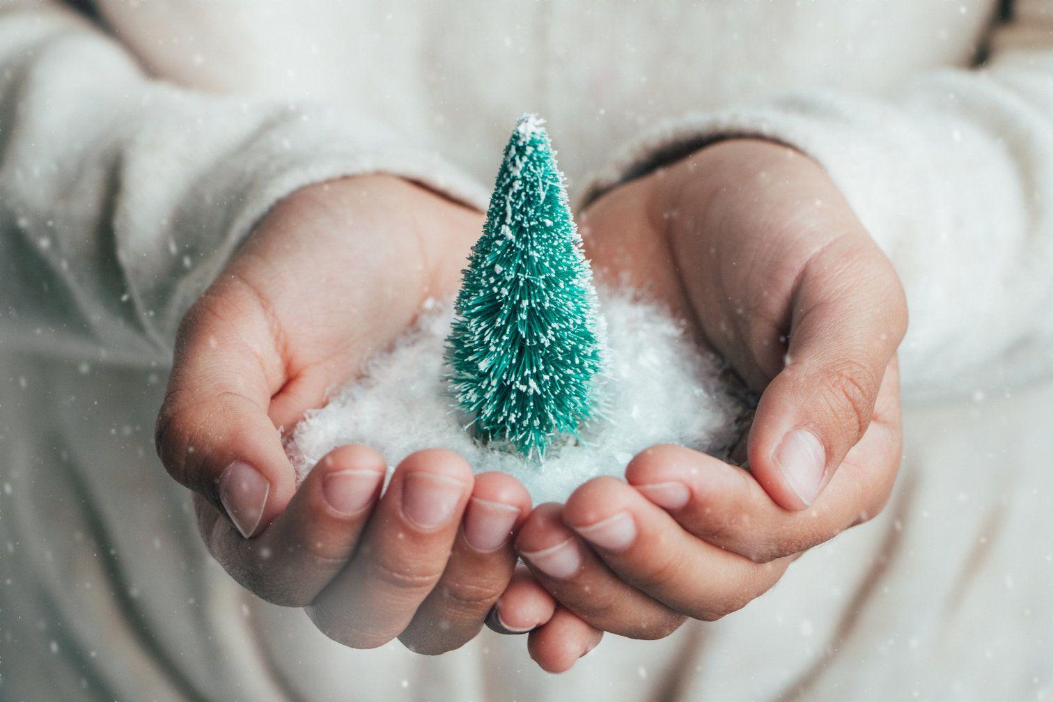 Weihnachtsbaumfreunde
