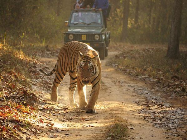 Kanha National Park In Madhya Pradesh The Kanha National Park Is