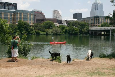 The Off Leash Dog Area At Auditorium Shores Provides Water Access Dog Park Town Lake Dog Playdate