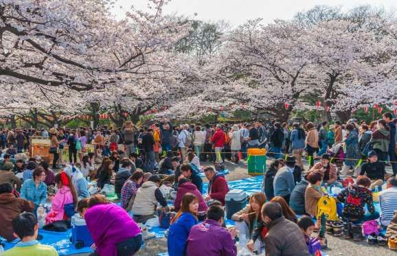 Everything You Need To Know About Japan S 2020 Cherry Blossom Season Cherry Blossom Japan Japan Cherry Blossom Season Himeji Castle