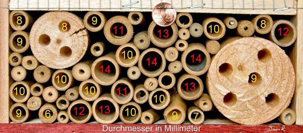 Bambus, Schilf- und Strohhalme sowie Pappröhrchen eignen isch gut zum Einsatz in Insektennisthilfen. Einige Dinge sollten allerdings beachtet werden!