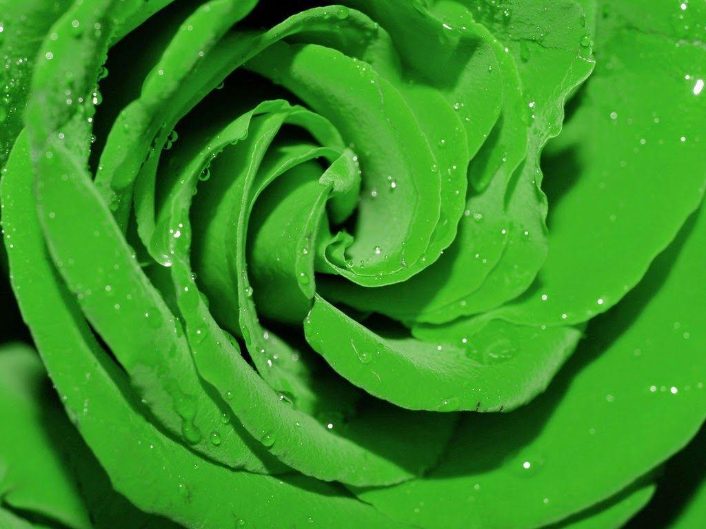 Картинка где много зеленого цвета