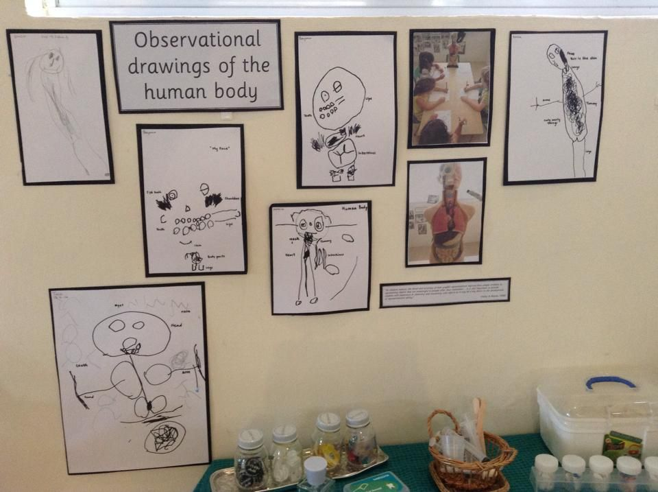 Observational Drawings Of The Human Body At Blue House International School Human Body Projects Human Body Art Classroom Documentation