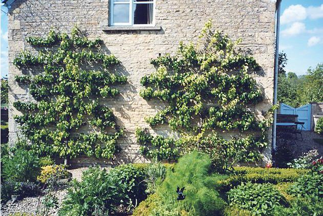 Miranda Brooks   gardens ... I Love..   Pinterest   Gardens