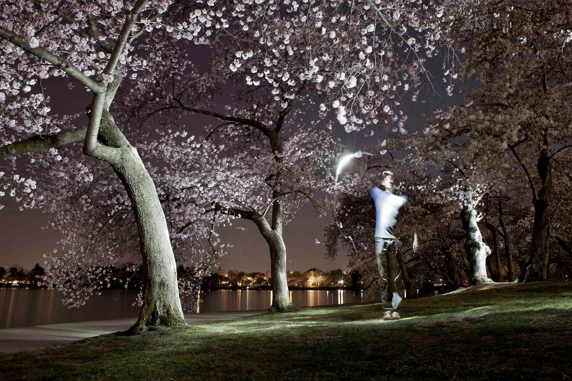 Cherry Blossoms At Night Cherry Blossom Wallpaper Japanese Cherry Blossom Japanese Cherry
