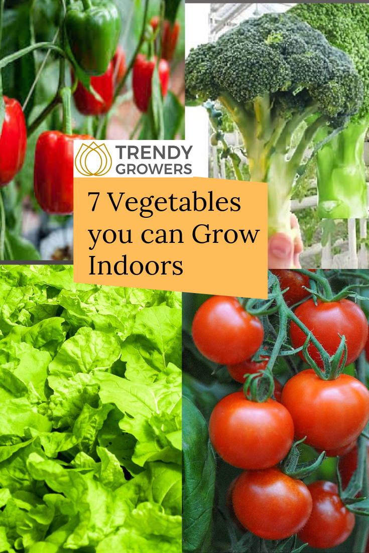 What Type Of Vegetables Can I Grow Inside A Grow Tent 400 x 300