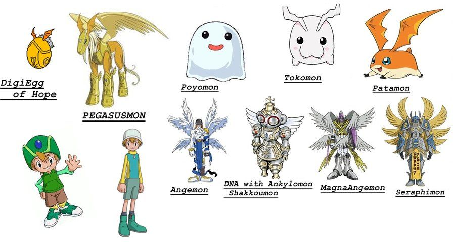 Digimon Evolutions Patamon Evolutions of patamon by Mase\u0027s Board