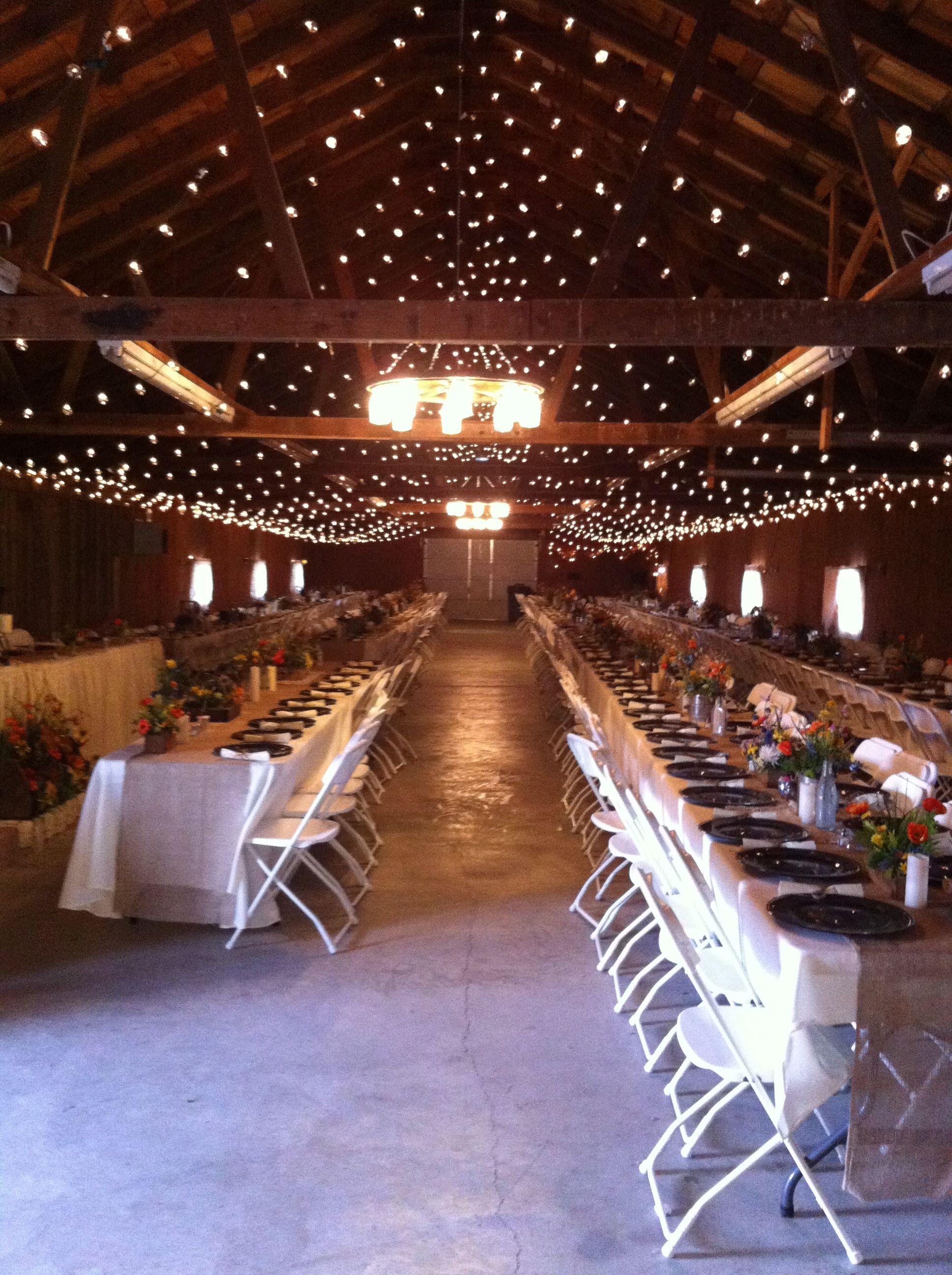 Wedding lights Wedding lights, Wedding tent, Garden inspired