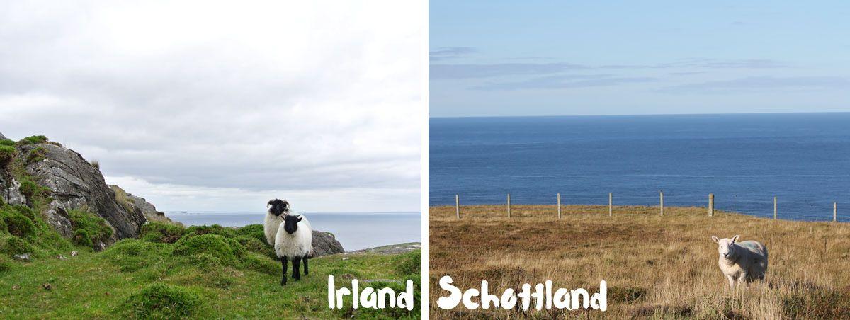 Schottland Oder Irland