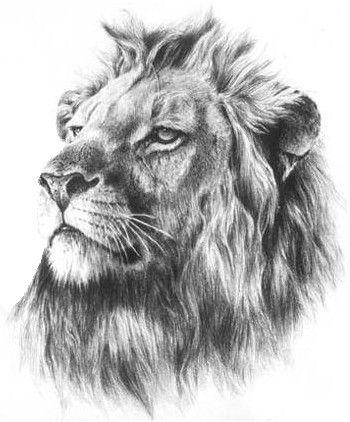 Lion Tattoo  If God was a lion, I think He would look like