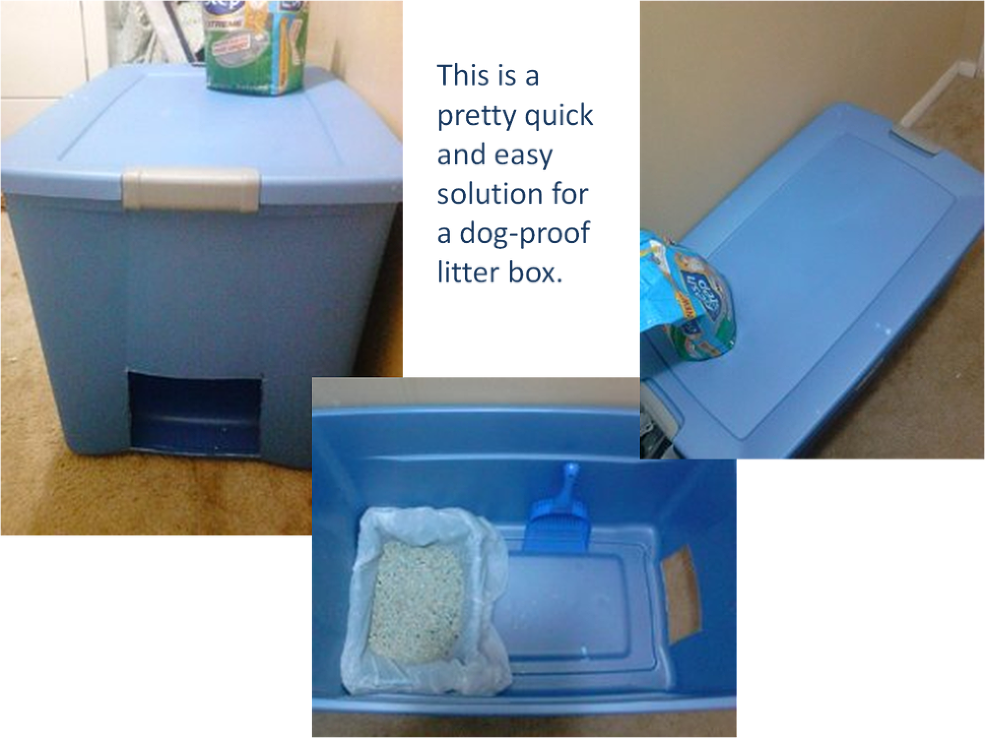 Easy and quick solution for dog proof litter box litter