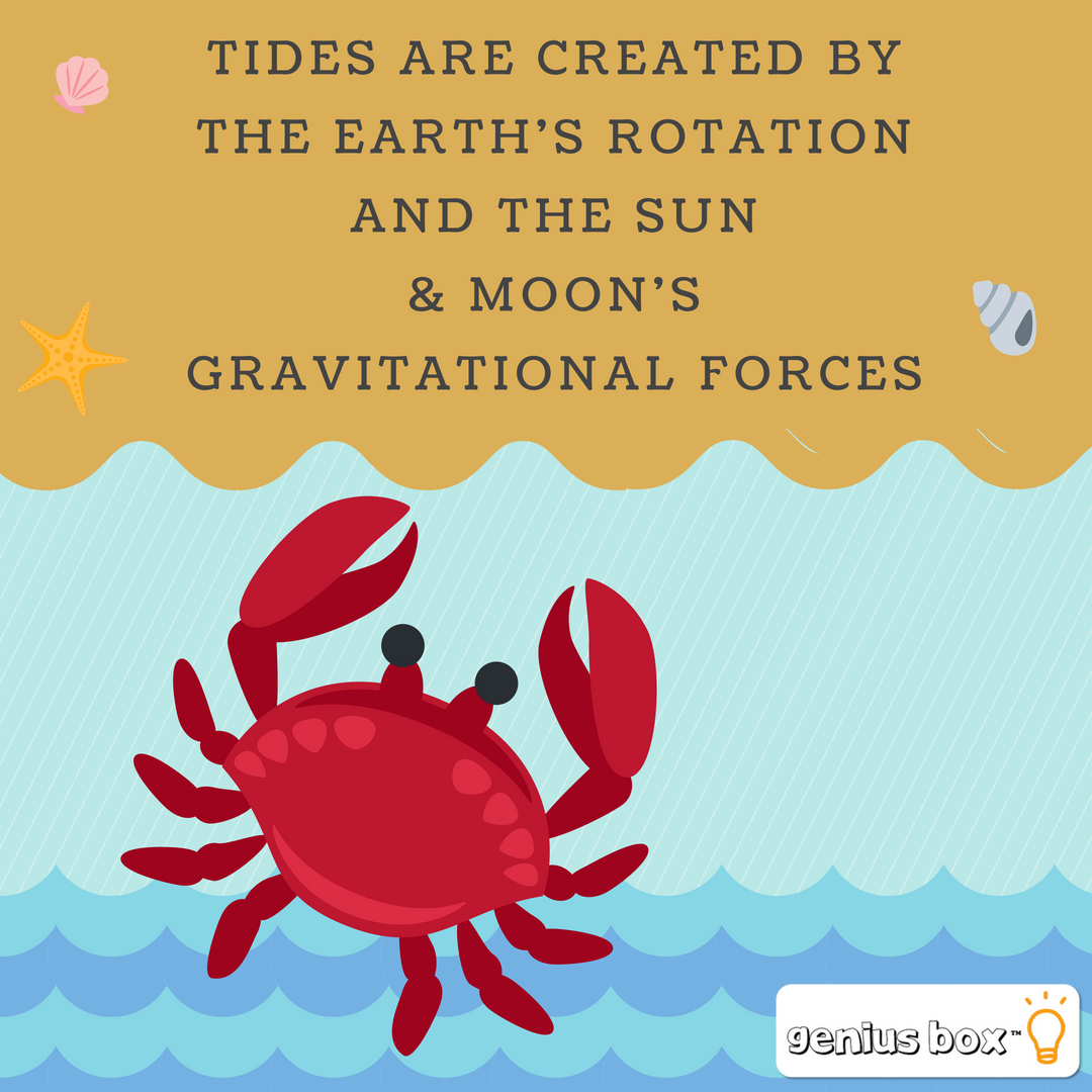 Did You Know? Tides are created by the earth's rotation ...