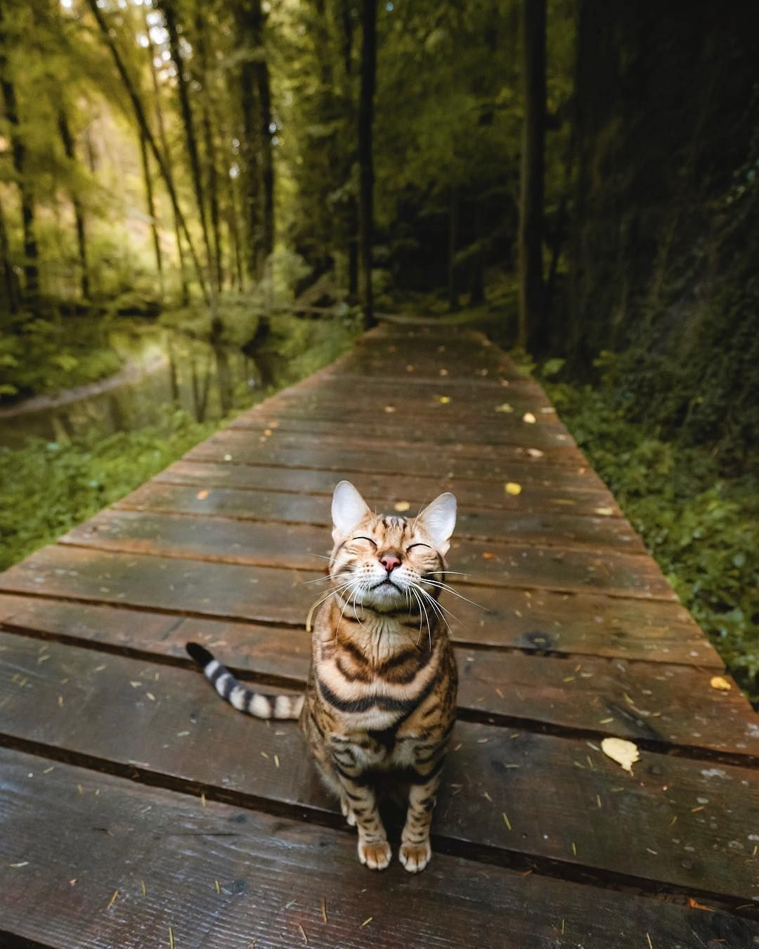 Follow Cutecatsnew For More Don T Forget To Follow Us Giveaway Soon Sukiicat In 2020 Cute Cats Kittens Beautiful Cats