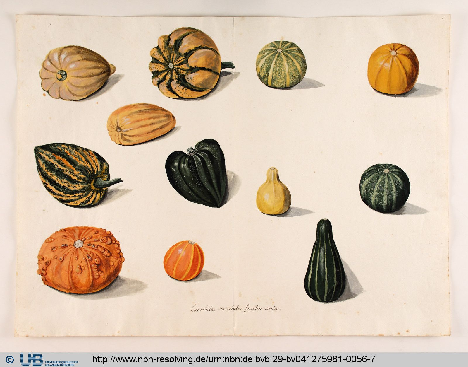 Holzwurm Nürnberg Georg Dionysius Ehret Cucurbita Colored Botanical Drawings
