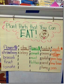 Pin von Kira Hobbs auf Future Teacher Ideas | Pinterest