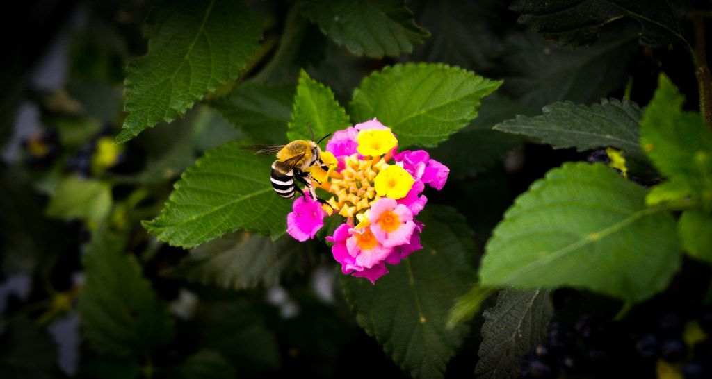A pretty Bee in Fuerteventura [OC][4944x2638] - http://ift.tt/2fN0zMK