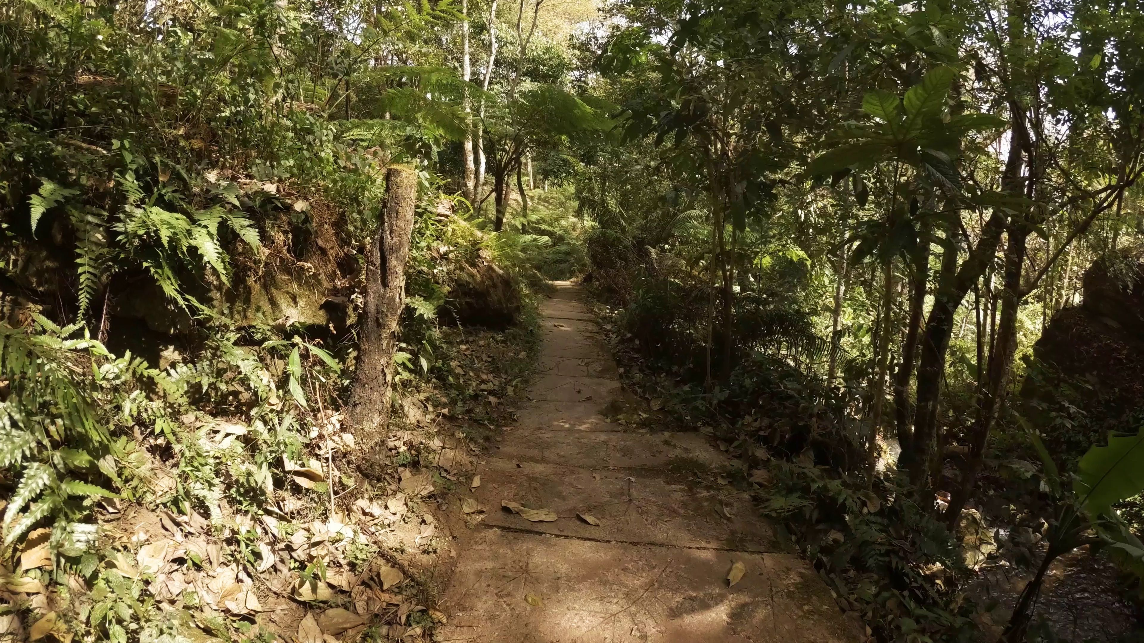 Hike Along Tropical Nature Trail In Thailand Jungle Stock Footage Nature Trail Hike Tropical Nature Trail Wilderness Trail Trail