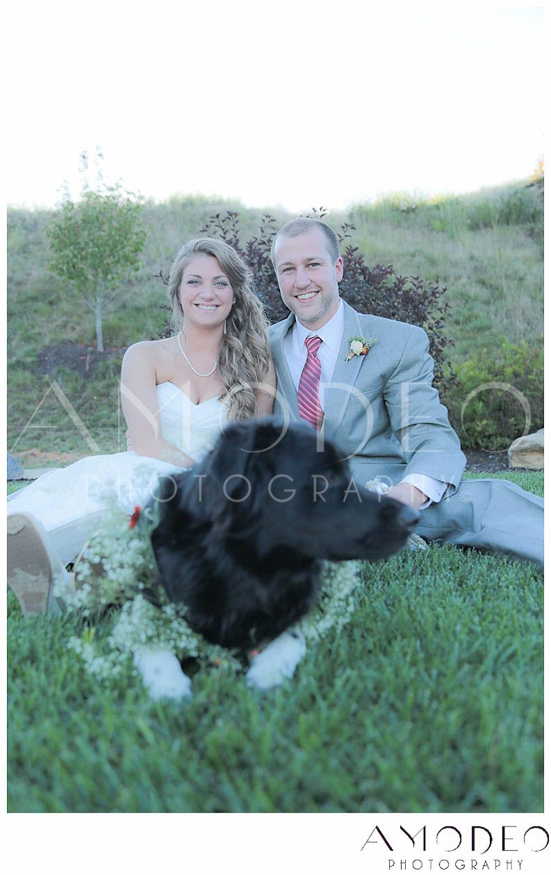 Dog Ring Bearer with Bride and Groom on grass, Formal photos with ...