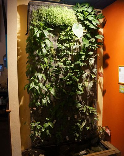Growing a garden on a wall!
