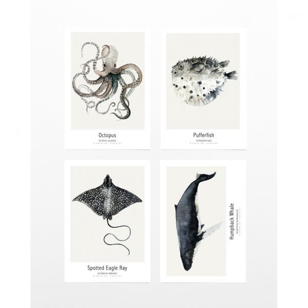 Postcards Ocean