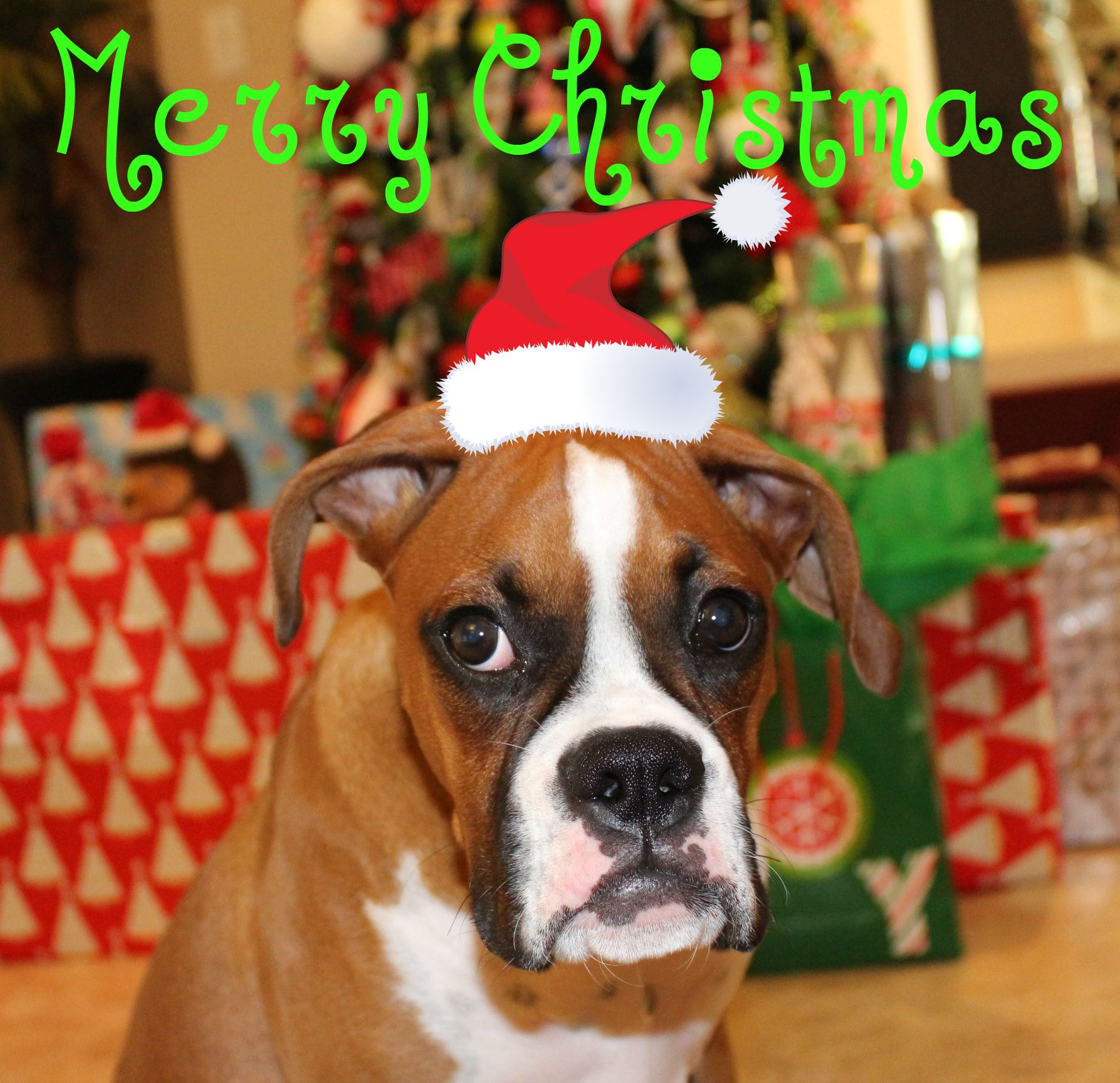Merry Christmas Boxer Puppy Boxer Puppy