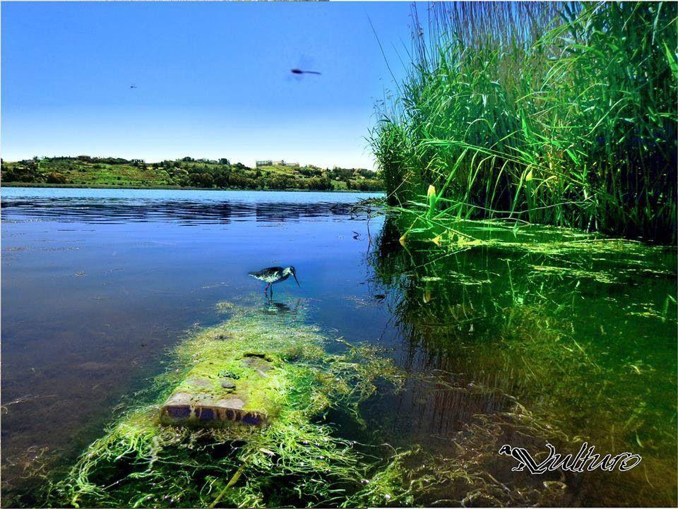 Enna, lago di Pergusa Sicilia | Sicilia, Lago, Laghi