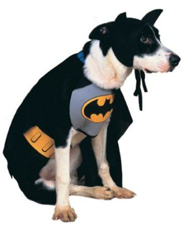 Superhero Costume For Your Pet Dog Pet Costumes