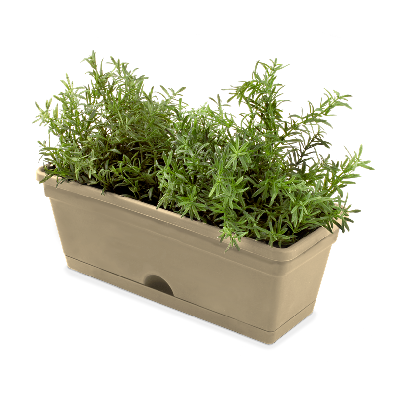 DIY Growing Rosemary Indoor and Outdoor Herb garden
