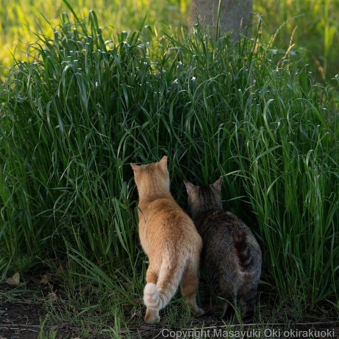 Masayuki Oki 猫写真家 にゃんこ相撲 絵本 On Instagram 気になるね