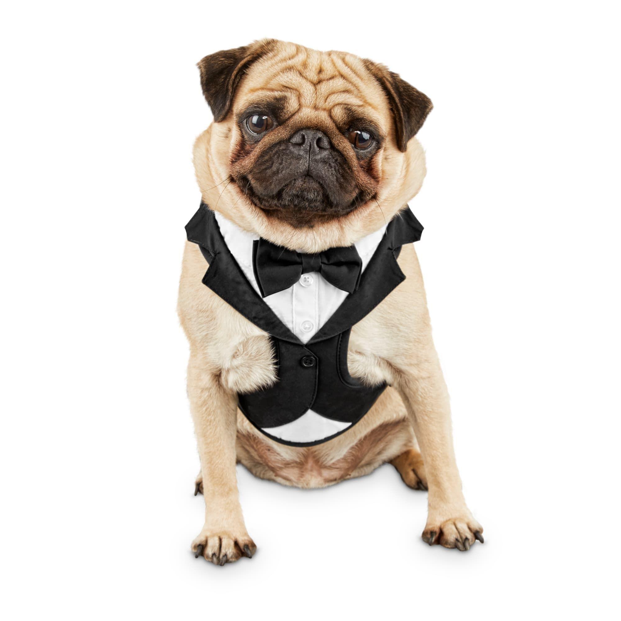 Bond co tuxedo dog harness small petco dog harness
