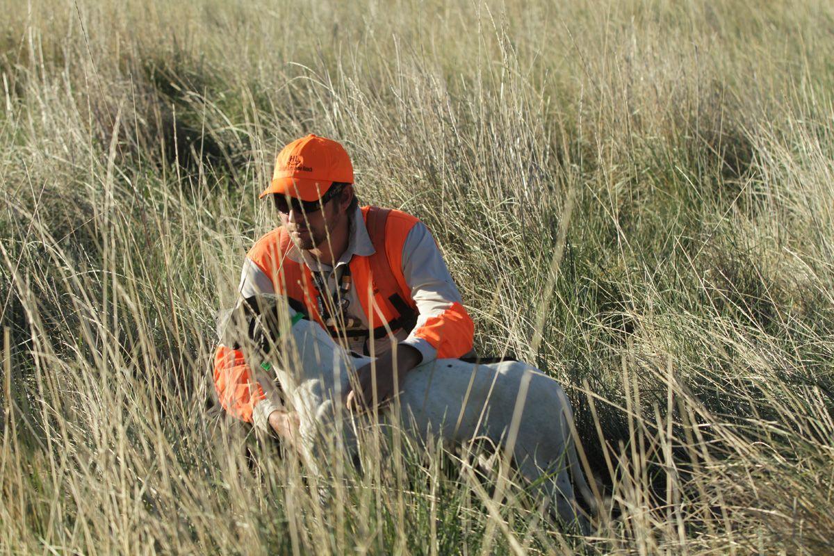 30+ Hunters Safety Card Colorado