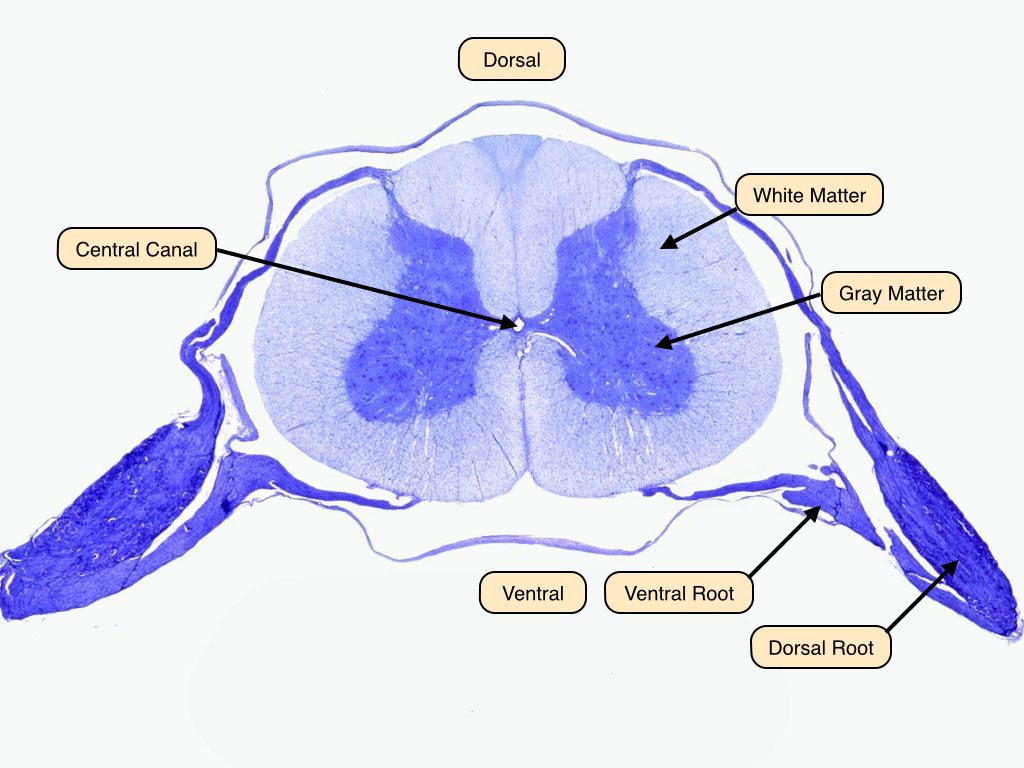 Thyroid nursing case study