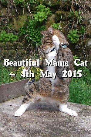 Diana Mills Tells About Beautiful Mama Cat – 4th May 2015   #catbreeds  #meow  #world  #animals  #lovecats  #Kittens  #Cat  #Patterns