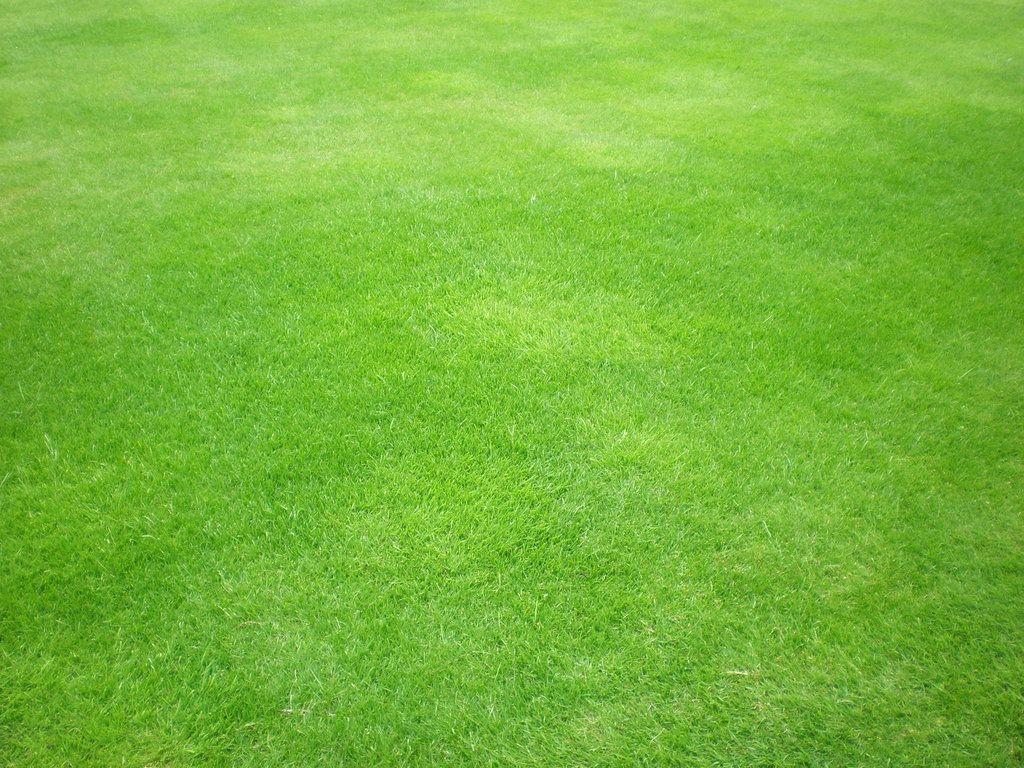 Green Grass By Gardek On Deviantart Grass Textures Grass Photoshop Photoshop Textures